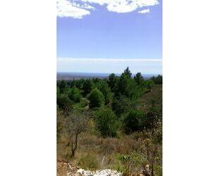 albero:) einmaliger Blick über Reus bis zum Meer - Castellvell del Camp Katalonien